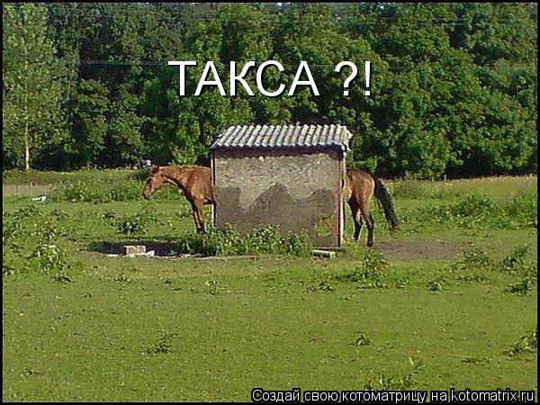 Котоматрица: ТАКСА ?!