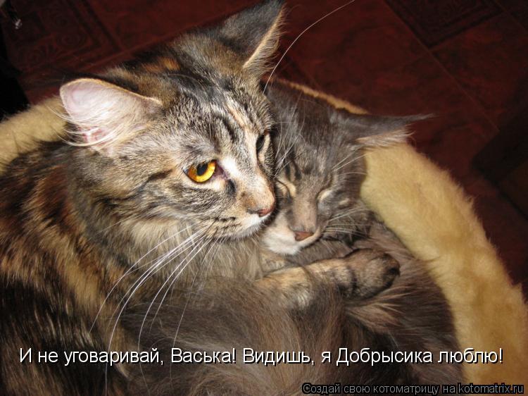 И не уговаривай, Васька! Видишь, я Добрысика люблю!