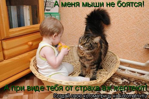 А меня мыши не боятся! А при виде тебя от страха аж желтеют!