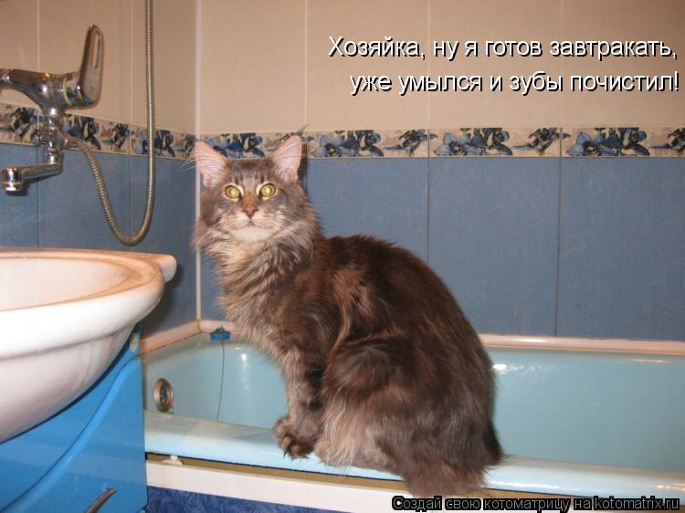 Хозяйка, ну я готов завтракать,  уже умылся и зубы почистил!