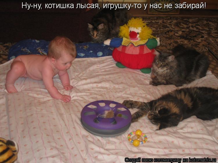 Ну-ну, котишка лысая, игрушку-то у нас не забирай!