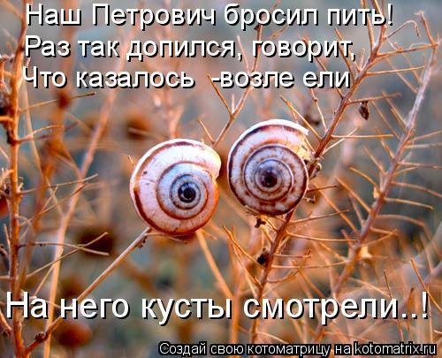 Котоматрица: Наш Петрович бросил пить! Раз так допился, говорит, Что казалось  -возле ели На него кусты смотрели..!