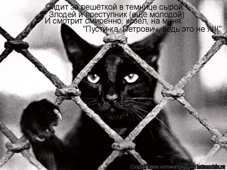 """Котоматрица: Сидит за решёткой в темнице сырой... Злодей и преступник (ещё молодой) И смотрит смиренно, козёл, на меня : """"Пусти-ка, Петрович, ведь это не я!!!"""""""