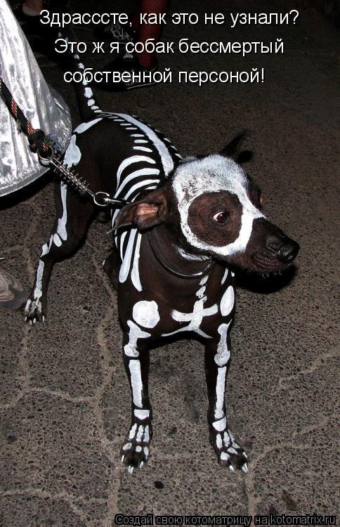 Котоматрица: Здрасссте, как это не узнали? Это ж я собак бессмертый  собственной персоной!