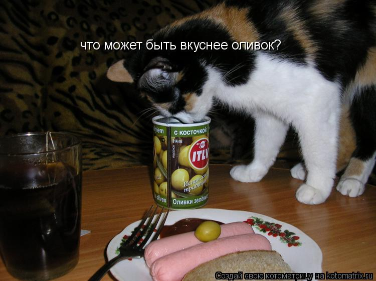Котоматрица: что может быть вкуснее оливок?