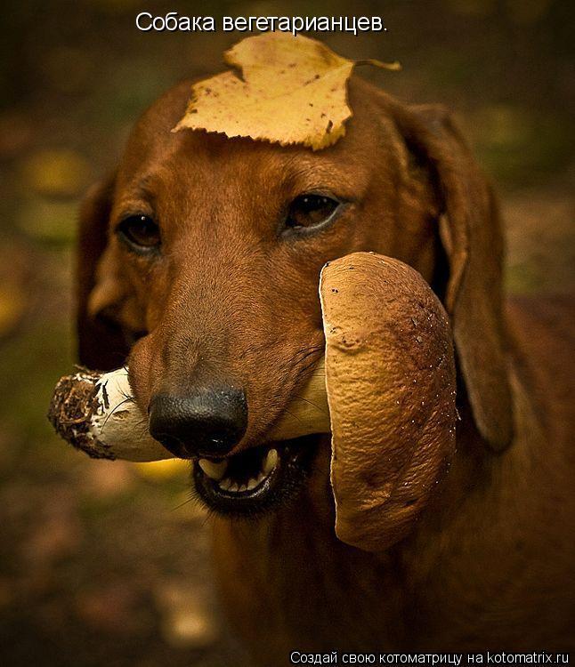 Котоматрица: Собака вегетарианцев.