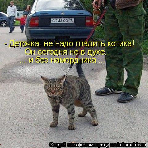 Котоматрица: - Деточка, не надо гладить котика! Он сегодня не в духе...  ... и без намордника ...