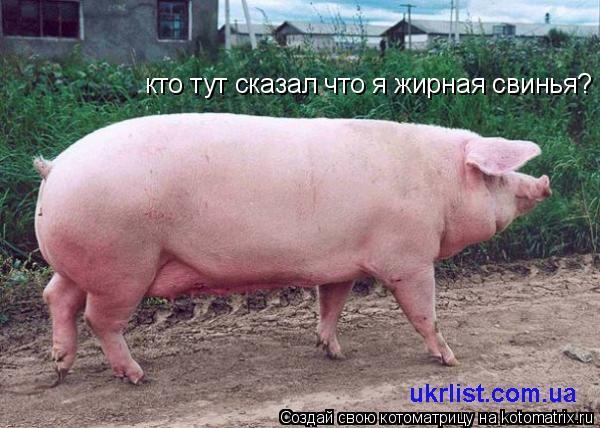 я жирная свинья как похудеть помогите