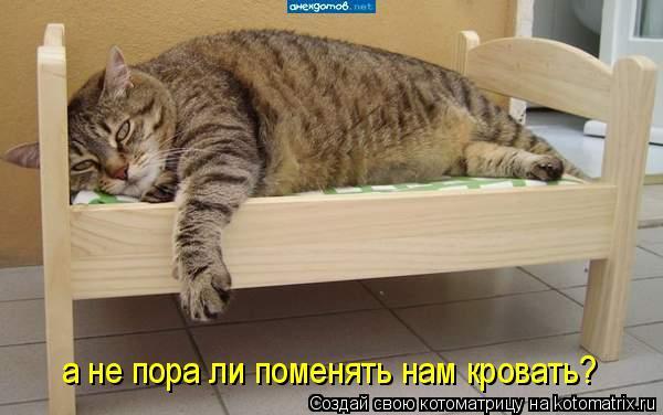 Котоматрица: а не пора ли поменять нам кровать?