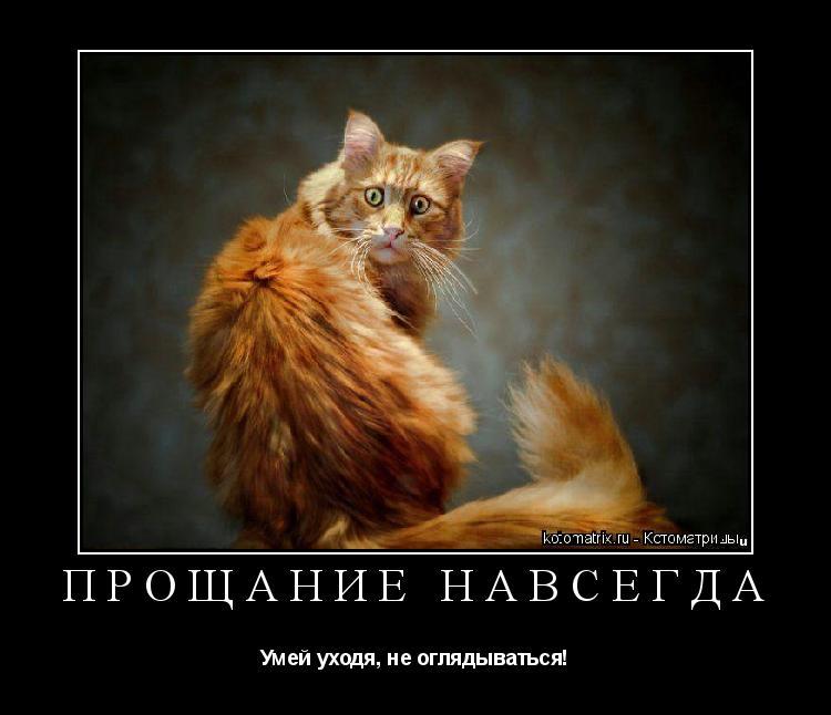 Котоматрица: Прощание навсегда Умей уходя, не оглядываться!