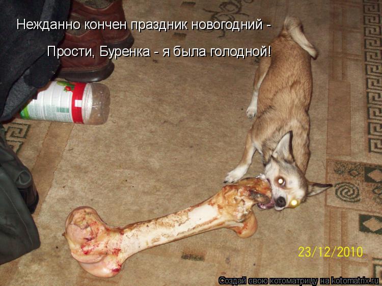 Котоматрица: Нежданно кончен праздник новогодний -  Прости, Буренка - я была голодной!