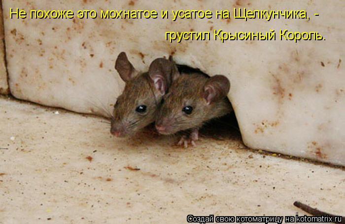 Котоматрица: Не похоже это мохнатое и усатое на Щелкунчика, - грустил Крысиный Король.