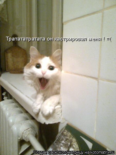 Котоматрица: Тратататратата он кастрировал меня ! =(