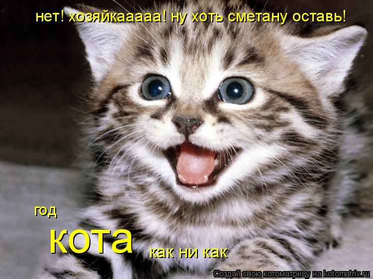 Котоматрица: нет! хозяйкааааа! ну хоть сметану оставь!  год кота как ни как