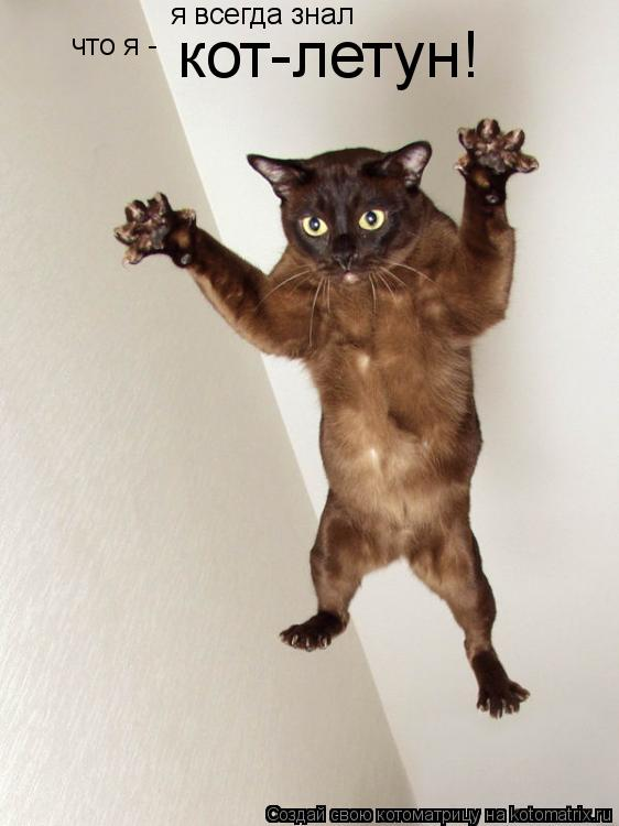 Котоматрица: я всегда знал что я - кот-летун!