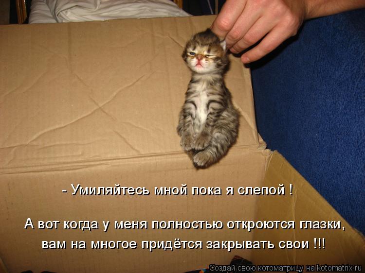 Котоматрица: вам на многое придётся закрывать свои !!! А вот когда у меня полностью откроются глазки, - Умиляйтесь мной пока я слепой !