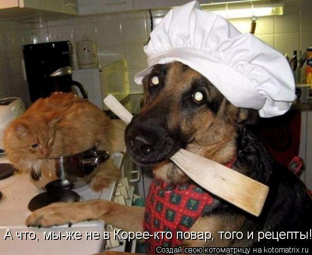 Котоматрица: А что, мы-же не в Корее-кто повар, того и рецепты!