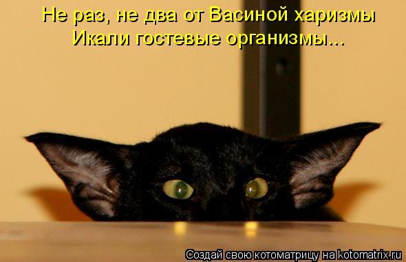 Котоматрица: Не раз, не два от Васиной харизмы Икали гостевые организмы...
