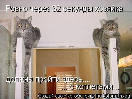 Котоматрица: Ровно через 32 секунды хозяйка должна пройти здесь.... ....с котлетами...