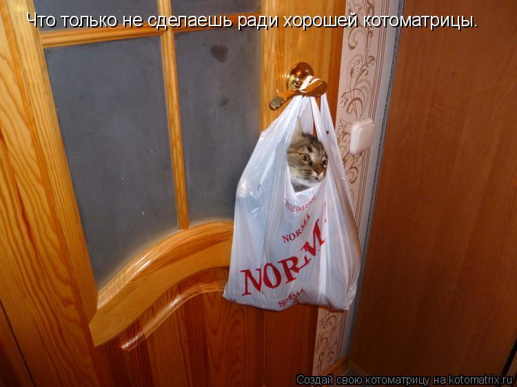Котоматрица: Что только не сделаешь ради хорошей котоматрицы.