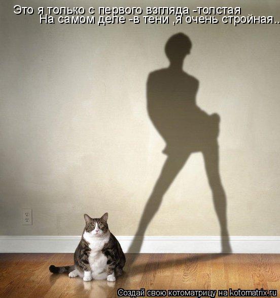 Котоматрица: Это я только с первого взгляда -толстая На самом деле -в тени ,я очень стройная...