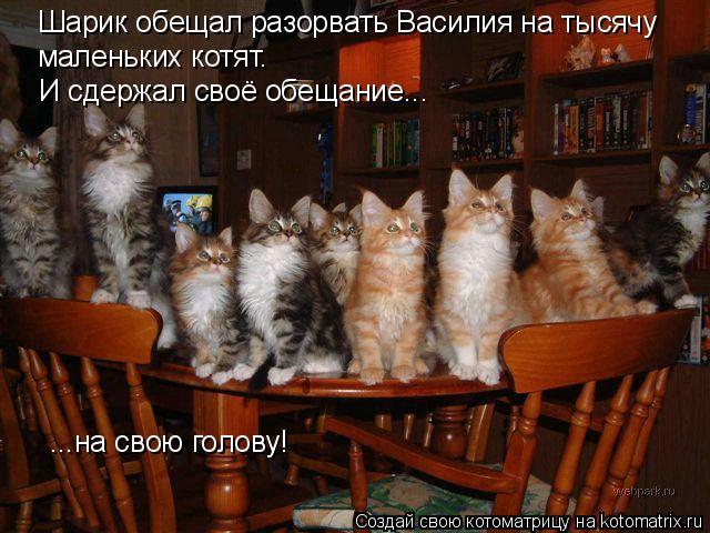 Котоматрица: И сдержал своё обещание... ...на свою голову! Шарик обещал разорвать Василия на тысячу маленьких котят.