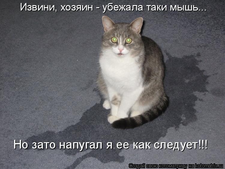 Котоматрица: Извини, хозяин - убежала таки мышь... Но зато напугал я ее как следует!!!