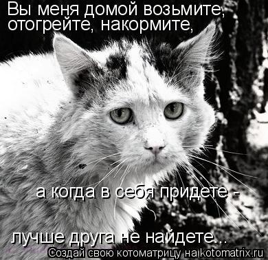 Котоматрица: Вы меня домой возьмите, отогрейте, накормите, а когда в себя придете - лучше друга не найдете...
