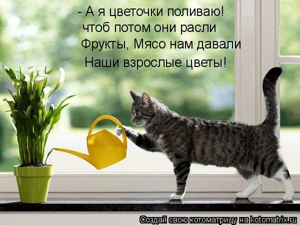 http://kotomatrix.ru/images/lolz/2011/01/09/787959.jpg