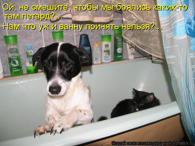 Котоматрица: Ой, не смешите, чтобы мы боялись каких-то  там петард?... Нам что уж и ванну принять нельзя?...
