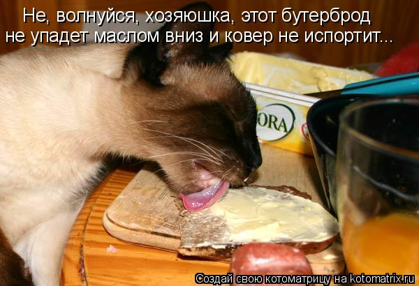 Не, волнуйся, хозяюшка, этот бутерброд не упадет маслом вниз и ковер н