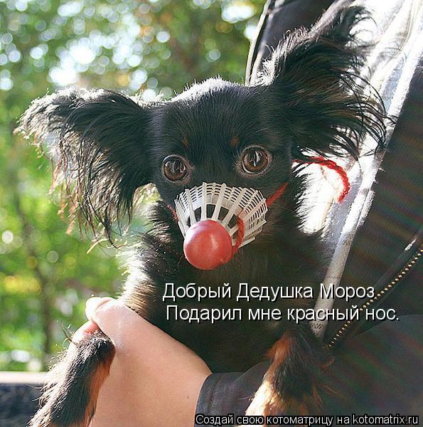 Котоматрица: Добрый Дедушка Мороз Подарил мне красный нос.