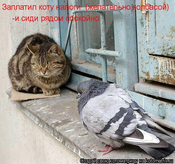 Котоматрица: Заплатил коту налоги  (желательно колбасой)   -и сиди рядом спокойно