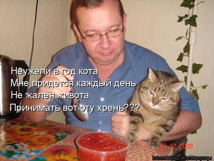 Котоматрица: Неужели в год кота Мне придется каждый день Не жалея живота Принимать вот эту хрень???