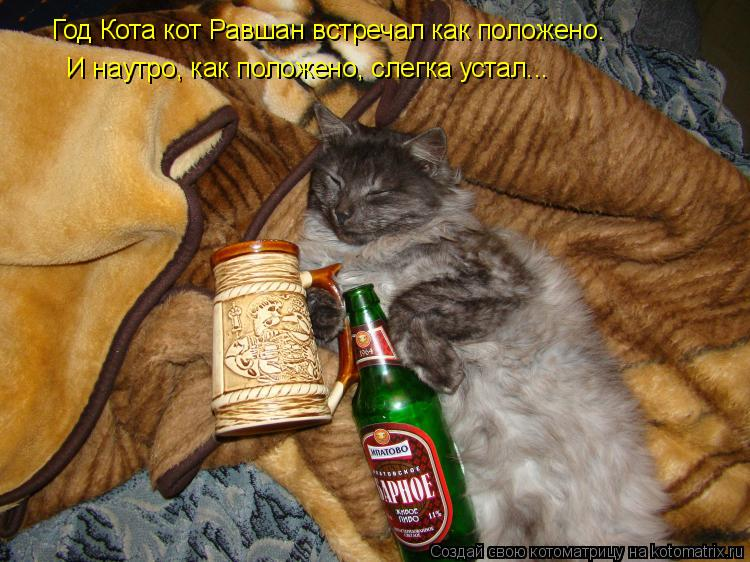Котоматрица: Год Кота кот Равшан встречал как положено.  И наутро, как положено, слегка устал...  И наутро, как положено, слегка устал...