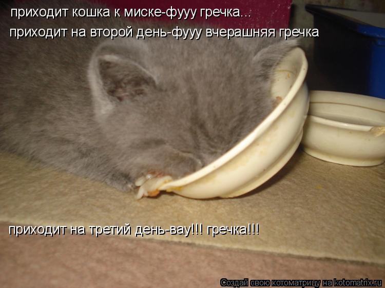 Котоматрица: приходит кошка к миске-фууу гречка... приходит на второй день-фууу вчерашняя гречка приходит на третий день-вау!!! гречка!!!