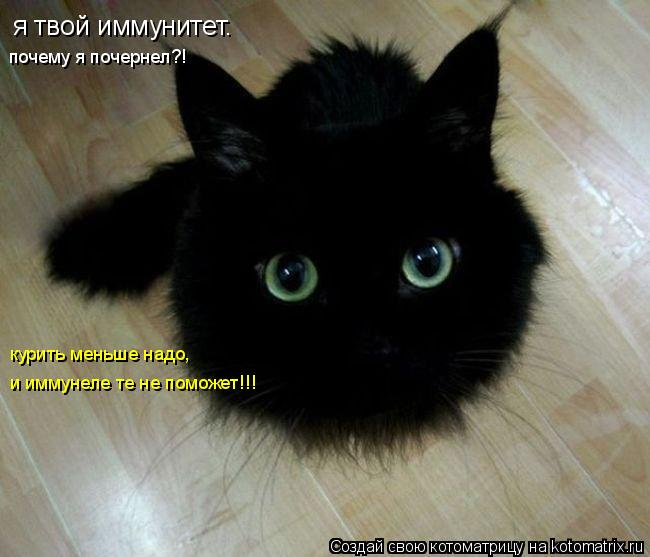 http://kotomatrix.ru/images/lolz/2011/01/10/788806.jpg
