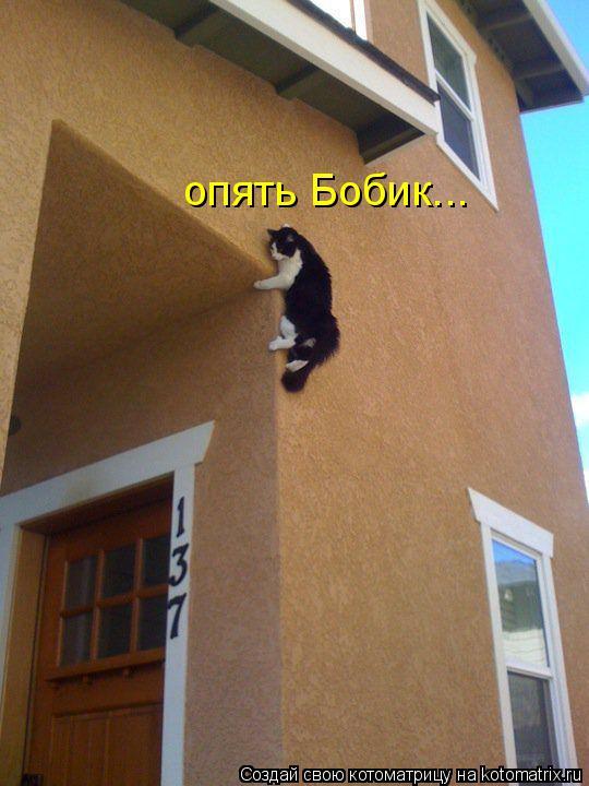 Котоматрица: опять Бобик...