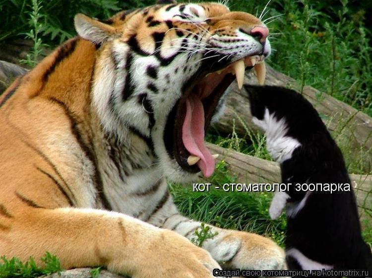 Котоматрица: кот - стоматолог зоопарка