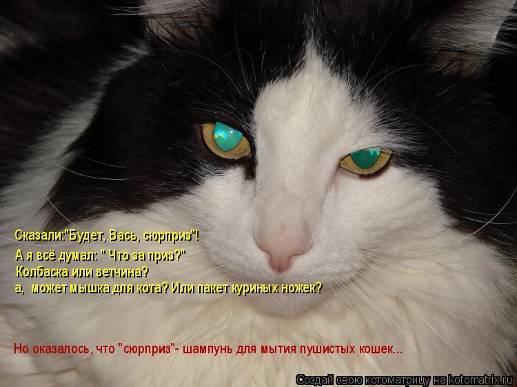 """Котоматрица: Сказали:""""Будет, Вась, сюрприз""""! А я всё думал: """" Что за приз?"""" Колбаска или ветчина? а,  может мышка для кота? Или пакет куриных ножек? Но оказалос"""