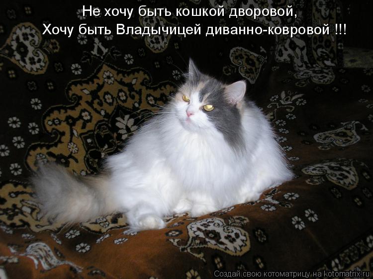 Хочу быть Владычицей диванно-ковровой !!! Не хочу быть кошкой дворовой