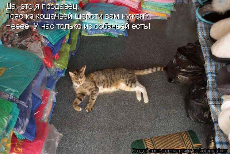 Котоматрица: Да, это я продавец. Пояс из кошачьей шерсти вам нужен?! Нееее. У нас только из собачьей есть!