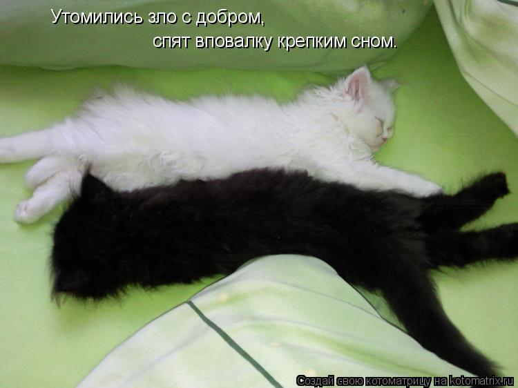 Котоматрица: Утомились зло с добром, спят вповалку крепким сном.