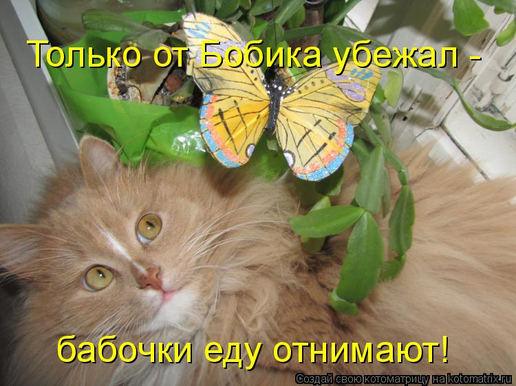 Котоматрица: Только от Бобика убежал - бабочки еду отнимают!