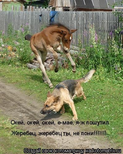 Котоматрица: Окей, окей, окей, е-мае, я-ж пошутил Жеребец, жеребец ты, не пони!!!!!!!