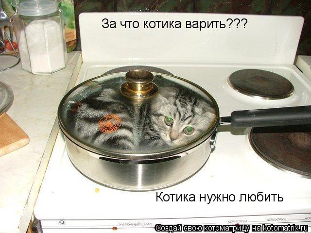 Котоматрица: За что котика варить??? Котика нужно любить