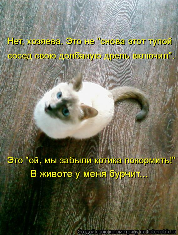 """Котоматрица: Нет, хозяева. Это не """"снова этот тупой сосед свою долбаную дрель включил"""". Это """"ой, мы забыли котика покормить!"""" В животе у меня бурчит..."""