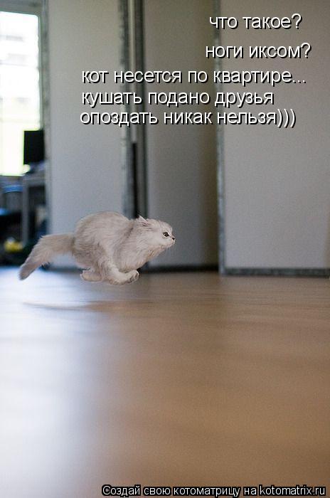 Котоматрица: что такое? ноги иксом? кот несется по квартире... кушать подано друзья опоздать никак нельзя)))