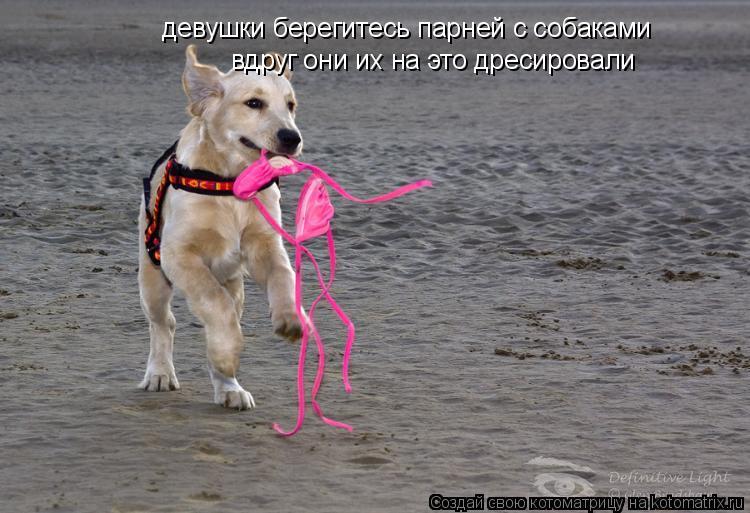 Котоматрица: девушки берегитесь парней с собаками вдруг они их на это дресировали
