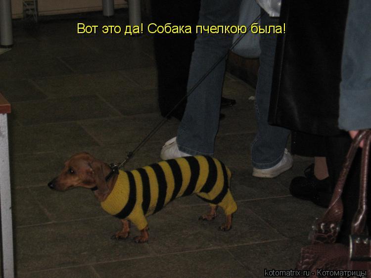Котоматрица: Вот это да! Собака пчелкою была!